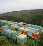 "Пчелохозяйство "" На100%ящий мёд"""